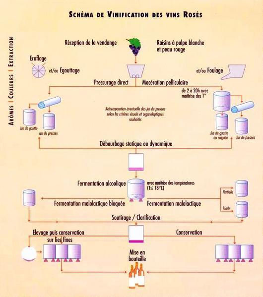 schéma_vinification_vins_rosés_